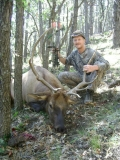 Bruce Shank from Virginia with his 2010 elk that he harvested near Mt. Taylor during the archery hunt.