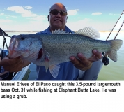 fishing-report-Elephant-Butte-Lake-largemouth-bass-11_01_2016-NMDGF