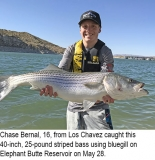 fishing-report-Elephant-Butte-striped-bass-06_12_2018-NMDGF