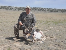 Pronghorn harvested by Lance Cherry during the 2011 archery hunt in Northern New Mexico.