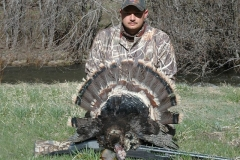 """Typical Merriam's wild turkey with 10"""" beard weighed in at 17.4 lbs. field dressed for a total score of 55.5625. Harvested by Lance Cherry in the Pecos Wilderness."""