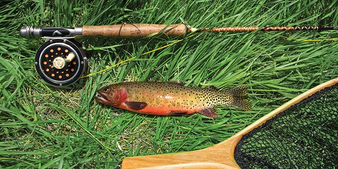 A Rio Grande cutthroat trout reared at Seven Springs Fish Hatchery, New Mexico. NMDGF photo by Martin Perea, New Mexico Wildlife magazine.