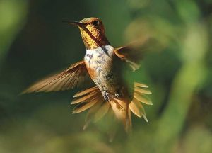 Hummingbird. NMDGF photo by Martin Perea.