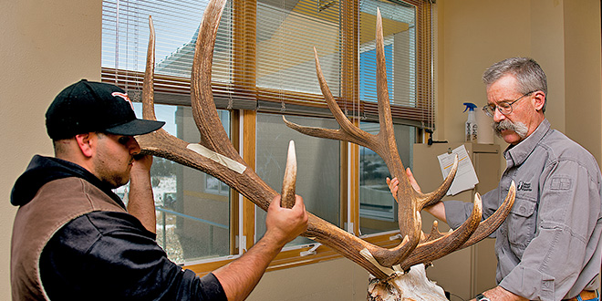 Game and Fish biologist Eric Rominger takes elk antler measurements. While it was a large rack, the measurements came up short of the record book minimum. Photo by Martin Perea, New Mexico Wildlife magazine, NMDGF.