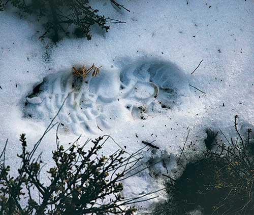 Two rules in helping conservation officers catch poachers is to report suspected illegal activity quickly so evidence is not lost and to leave the scene undisturbed so evidence can be photographed and/or collected. New Mexico Wildlife magazine, NMDGF