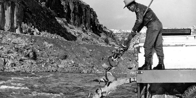 Planting trout in the Rio Grande Gorge. Photo: John G. Whitcomb. New Mexico Wildlife Magazine, Vol-49, Num-2 Summer 2004. (Making Tracks: A Century of Wildlife Management. (History of the New Mexico Department of Game and Fish).