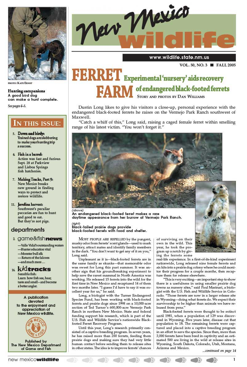 Ferret Farm: Experimental Nursery Aids Recovery of Black Footed Ferrets - New Mexico Wildlife magazine - Volume 50, Number 3, Fall 2005, New Mexico Game and Fish (NMDGF).