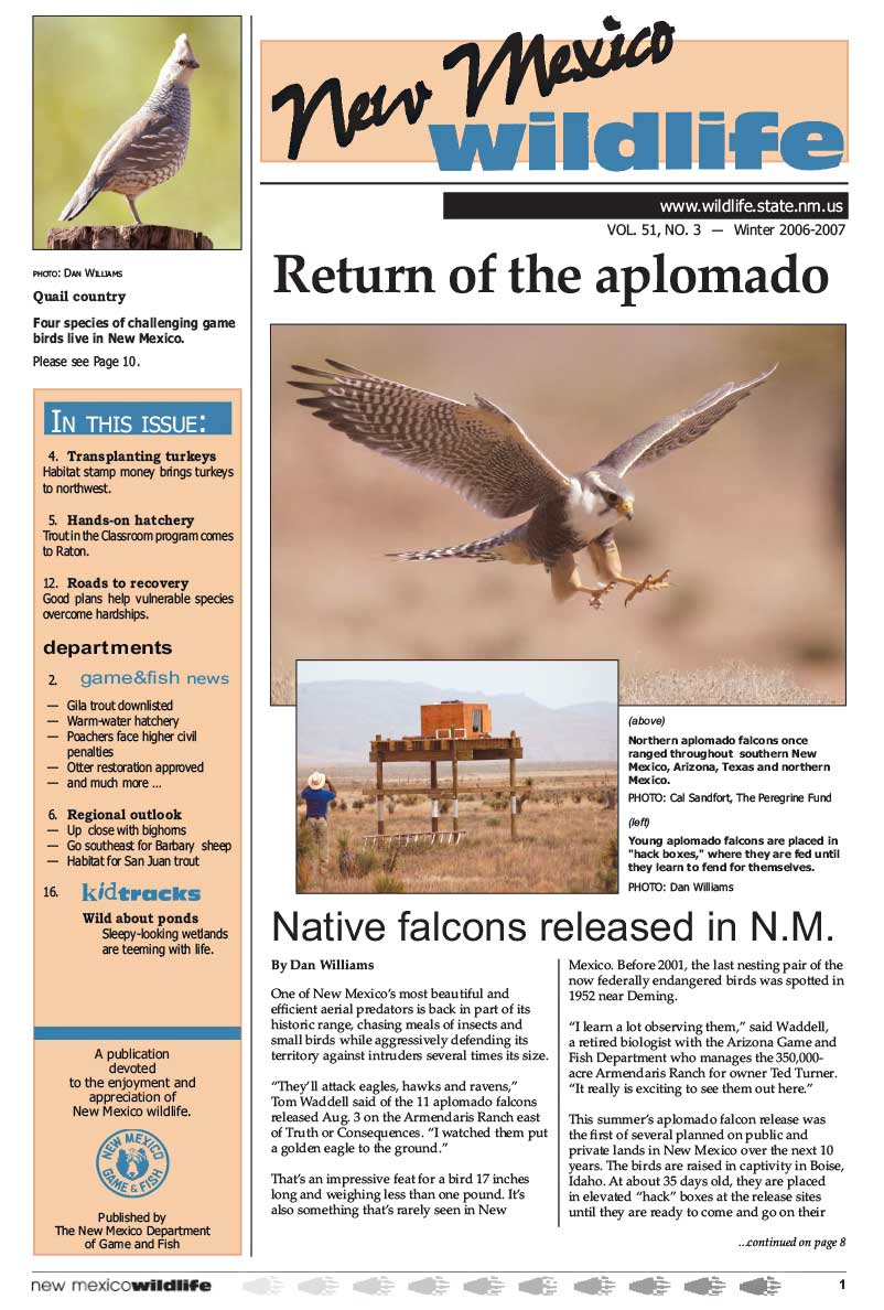 Return of the Aplomado: Native Falcons Released in NM - New Mexico Wildlife magazine - Volume 51, Number 3, Winter 2006-2007, New Mexico Game and Fish (NMDGF).