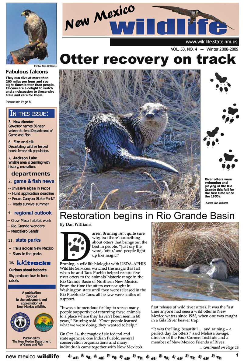 Otter Recover on Track: Restoration Begins in Rio Grande Basin - New Mexico Wildlife magazine - Volume 53, Number 4, Winter 2008/2009, New Mexico Game and Fish (NMDGF).