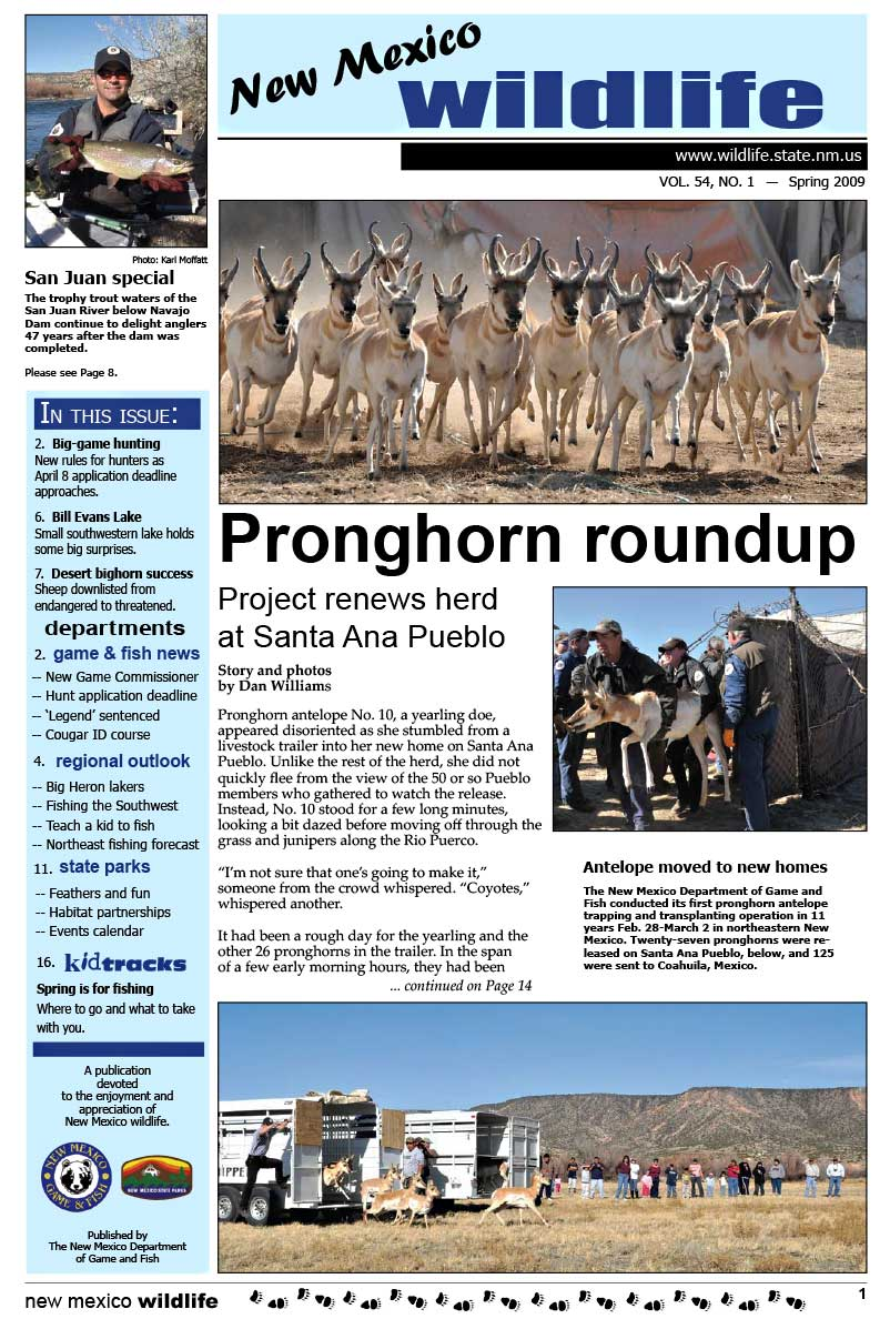 Pronghorn Roundup: Project Renews Herd at Santa Ana Pueblo - New Mexico Wildlife magazine - Volume 54, Number 1, Spring 2009, New Mexico Game and Fish (NMDGF).