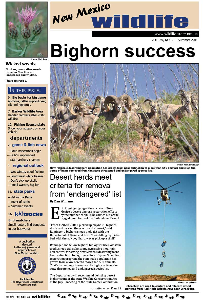 Bighorn Success: Desert Herds Meet Criteria for Removal from Endangered List - New Mexico Wildlife magazine - Volume 55, Number 2, Summer 2010, New Mexico Game and Fish (NMDGF).