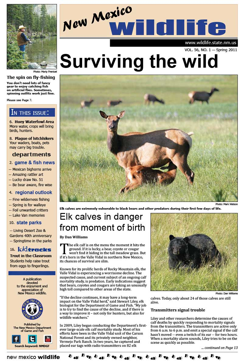 Surviving the Wild: Elk Calves in Danger from Moment of Birth - New Mexico Wildlife magazine - Volume 56, Number 1, Spring 2011, New Mexico Game and Fish (NMDGF).