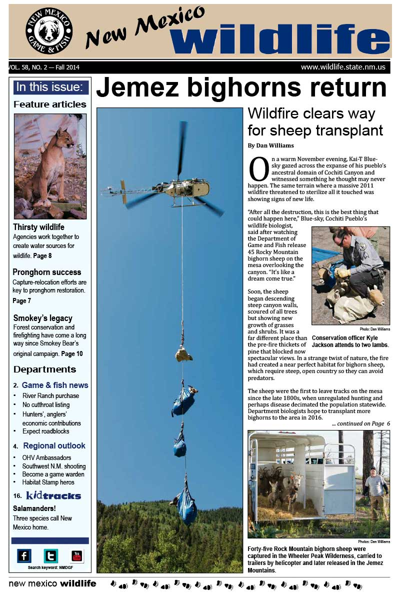 Jemez Bighorns Return: Wildfire Clears the Way for Sheep Transplant - New Mexico Wildlife magazine - Volume 58, Number 2, Fall 2014, New Mexico Game and Fish (NMDGF).