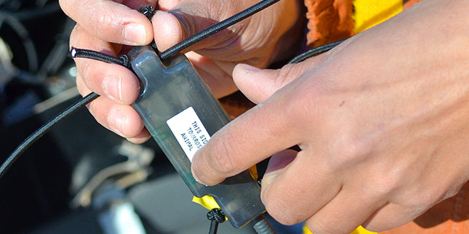 Tracking devices exist that can aid in the research of birds, mammals, fish, insects and arachnids, but with each different species come separate challenges. This backpack-style transmitter works well with wild turkeys. NMDGF pthoto by Zen Mocarski, New Mexico Wildlife magazine Spring 2017 Vol60, Num1, New Mexico Department of Game and Fish.