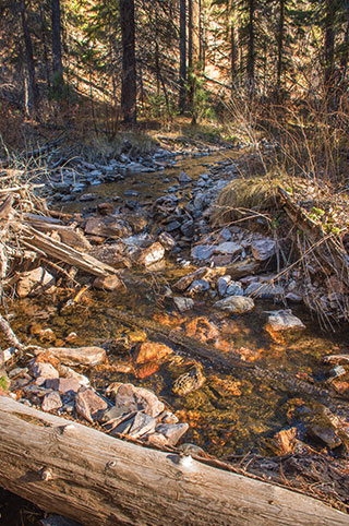 The Whitewater-Baldy Fire of 2012 didn't directly impact fish in Mineral Creek, but the subsequent ash flows during the monsoonal rains created a toxic environment in the waterway, smothering the stream and killing aquatic life. It took four years before the water conditions were considered suitable for the reintroduction of Gila trout. USFWS photo by Brett Billings, New Mexico Wildlife magazine Spring 2017 Vol60, Num1, New Mexico Department of Game and Fish.
