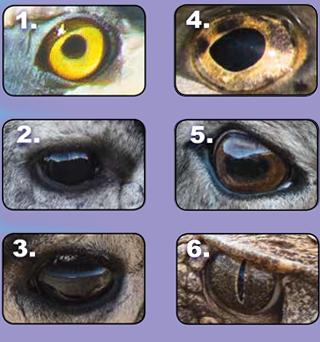 Animal eyes. Kids Tracks, New Mexico Wildlife - Vol 62 #1 Spring 2019