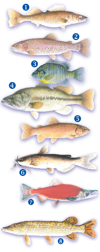 Cold water fish vs. warm water fish. Kids Tracks, New Mexico Wildlife - Vol 62 #1 Spring 2019