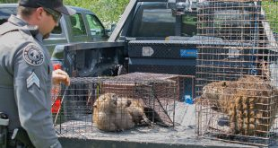 Sergeant Shawn Carrell of the Las Vegas Supervisory District assisted with capturing two beavers from a private pond in Ledoux near Morphy Lake State Park.