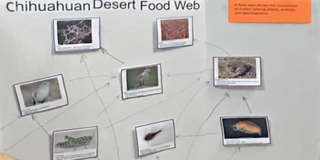 Chihuahuan Desert food web. Photo by Ginny Seamster.